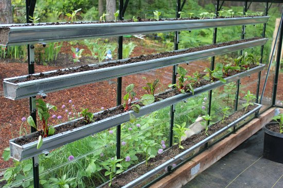 Growing Vegetables In A Greenhouse One Hundred Dollars A