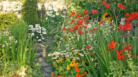 wildflower cottage garden