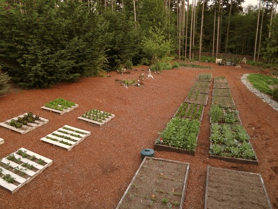 Mavis Butterfield | Backyard Garden Plot Pictures – Week 21 of 52