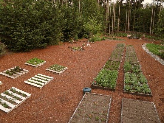 Mavis Butterfield | Backyard Garden Plot Pictures – Week 21 of 52