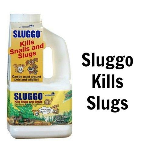 Sluggo organic slug killer