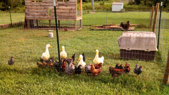 Mavis Mail – Heather Sends in Her Backyard Garden Photos