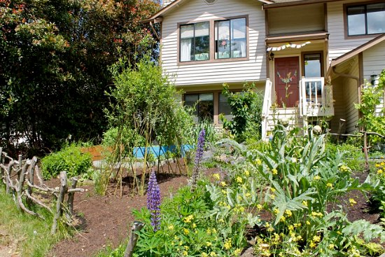 Mavis Mail – Front Yard Garden Edible Garden Photos From Everett, Washington