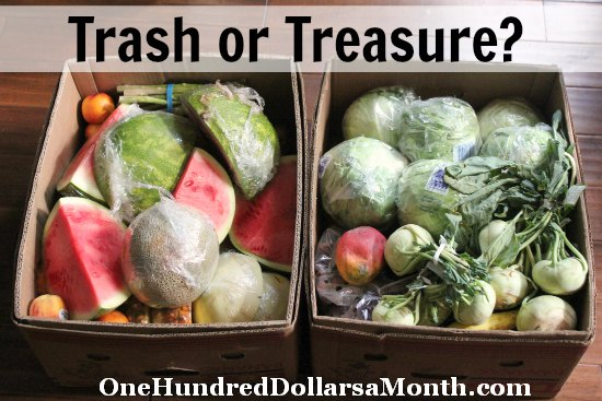 Food Waste In America – Is it Trash or Treasure?