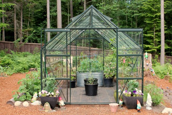 Growing Tomatoes, Basil and Cucumbers in a Greenhouse