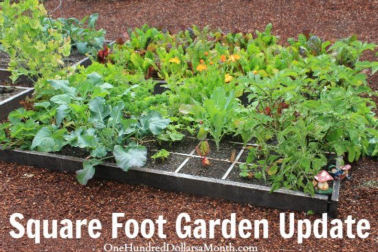 how to plant a square foot garden