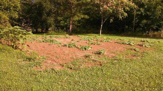 large garden plot