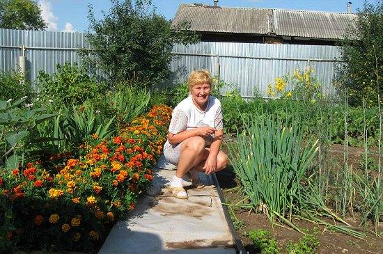 marigolds in garden