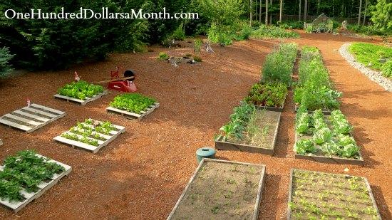 Mavis Butterfield   Backyard Garden Plot Pictures – Week 25 of 52