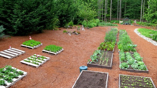 Mavis Butterfield | Backyard Garden Plot Pictures – Week 24 of 52