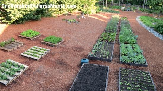 Mavis Butterfield   Backyard Garden Plot Pictures – Week 23 of 52