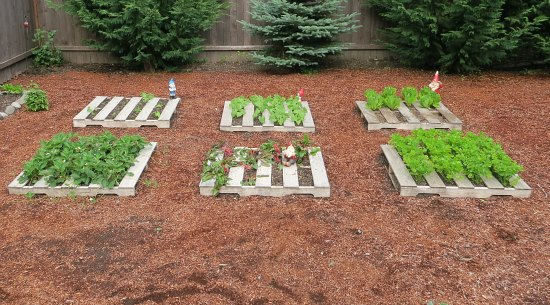 mavis butterfield | backyard garden plot pictures ? week 26 of 52 ... - Come Fare Un Orto