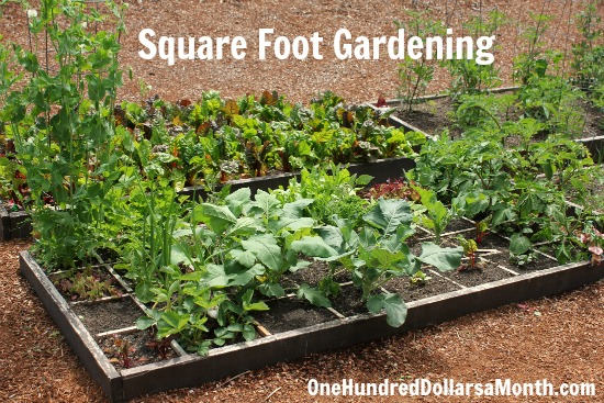 Square Foot Gardening: First Harvest