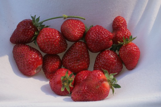 How to Grow Your Own Food – 6/5/2013 Garden Tally