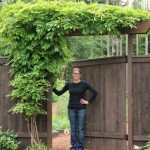 wisteria over garden gate