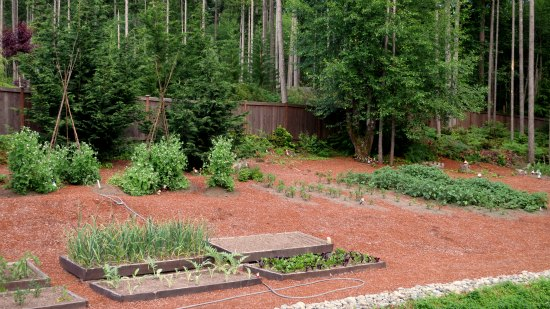 wooded backyard garden