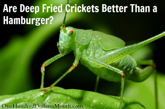 Are Deep Fried Crickets Better Than a Hamburger?