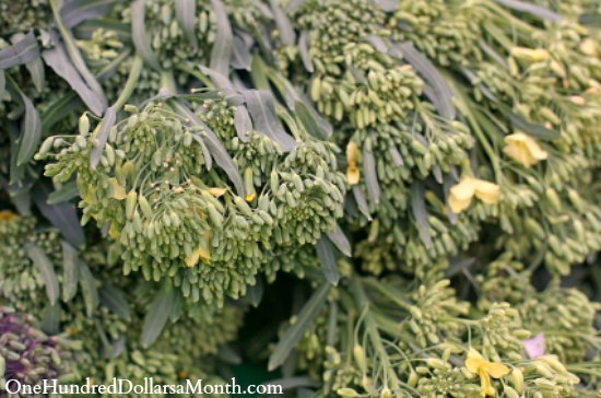How to Grow Broccoli Raab {Start to Finish}