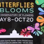 San Francisco Conservatory Butterfly Garden