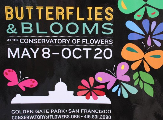 San Francisco Conservatory of Flowers – Butterfly Garden
