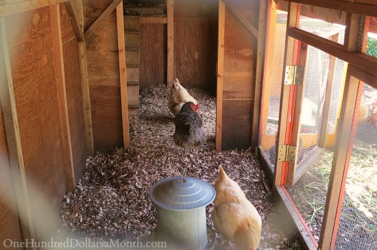 Seattle Chicken Coop and Urban Farm Tour
