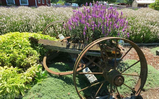 Sequim Lavender Festival and Street Fair