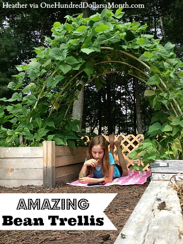 Amazing Bean Trellis and Garden Box Photos