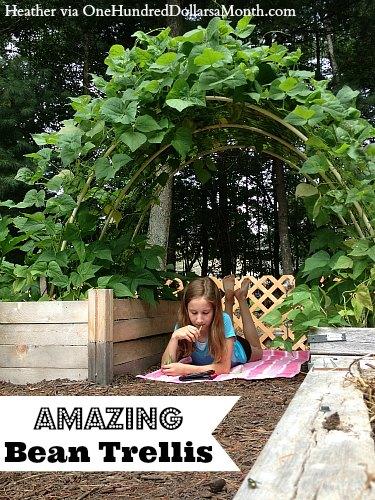 Amazing Bean Trellis and Garden Box Photos