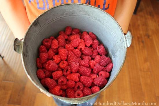bucket of raspberries