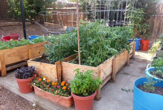Gardening in Small Spaces - Container Gardening