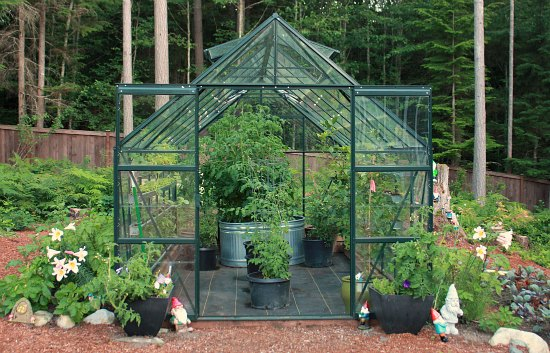 Growing Greenhouse Tomatoes and Cucumbers in the Pacific Northwest