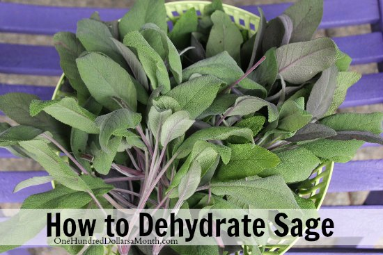 how to dehydrate herbs sage