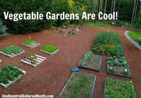 Mavis Butterfield | Backyard Garden Plot Pictures – Week 27 of 52
