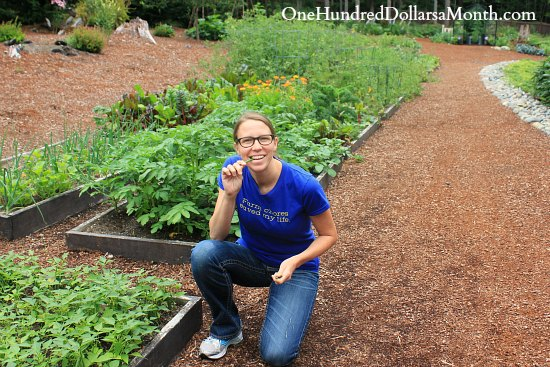 How to Grow Your Own Food – 7/31/2013 Garden Tally