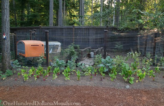 Mavis Butterfield | Backyard Garden Plot Pictures – Week 29 of 52