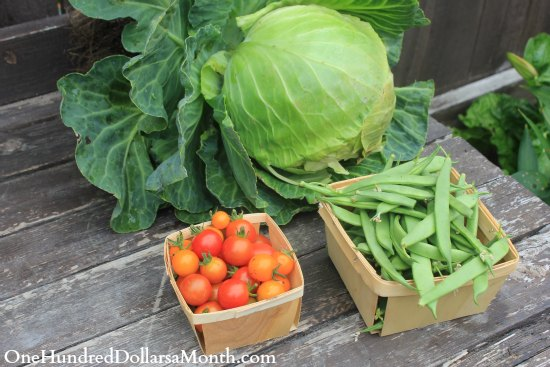 How to Grow Your Own Food – 7/24/2013 Garden Tally