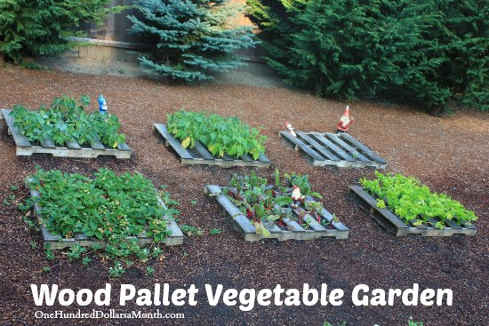 Wood pallet garden for Gardening using pallets