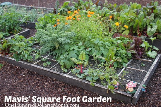Mavis' Square Foot Gardening Update
