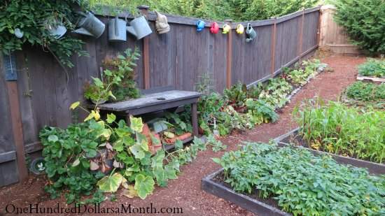 Mavis Butterfield | Backyard Garden Plot Pictures – Week 34 of 52