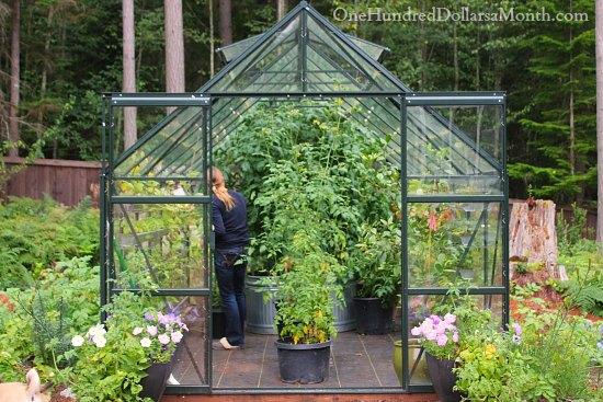 Greenhouse Vegetable Gardening Tomatoes Cucumbers