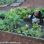 Square Foot Gardening is Easy