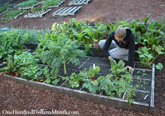 square foot gardening square foot gardening is easy one hundred dollars a month 29212