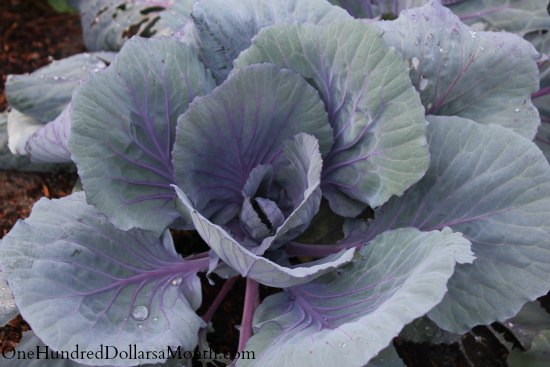 How to Grow Your Own Food – 8/28/2013 Garden Tally