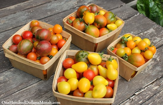 How to Grow Your Own Food – 8/14/2013 Garden Tally