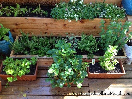 container-herb-garden2