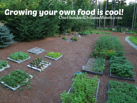 How to grow your own food 8 7 2013 garden tally for Backyard food garden ideas