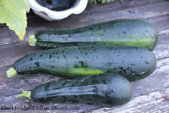 How to Grow Your Own Food – 8/21/2013 Garden Tally