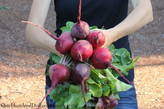 heirloom beets