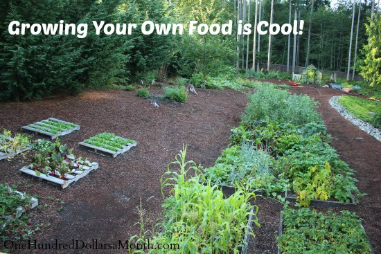 Mavis Butterfield | Backyard Garden Plot Pictures – Week 35 of 52