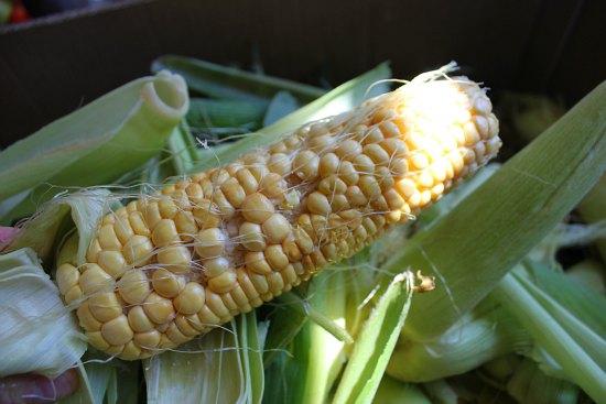 mutant corn